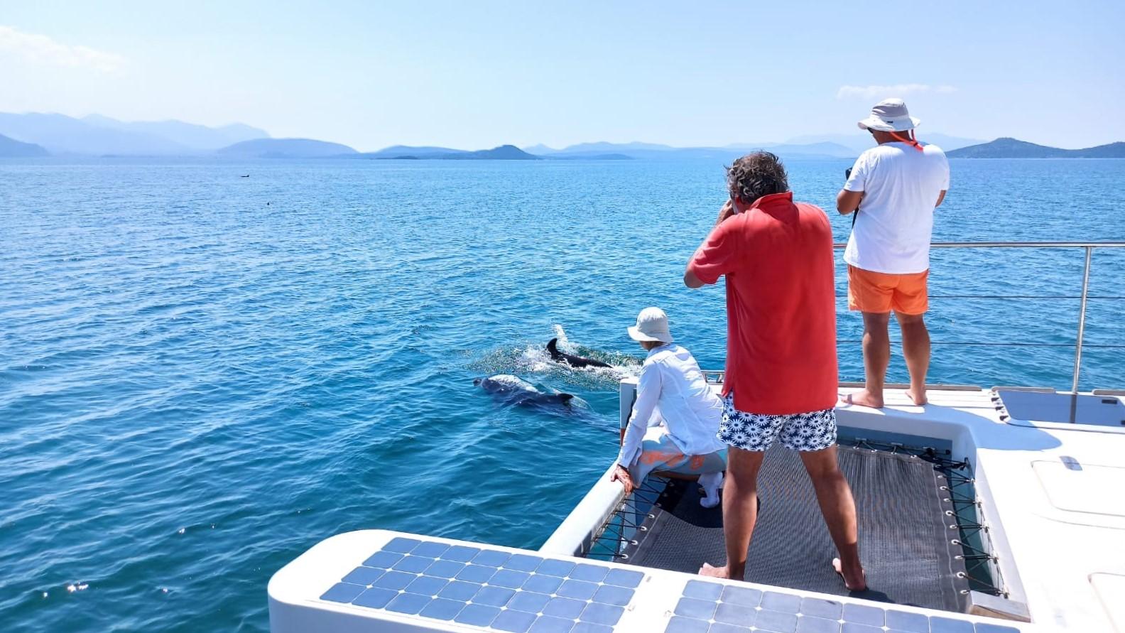 3 Personen beobachten und fotografieren Delphine vom Bug eines Solarboots